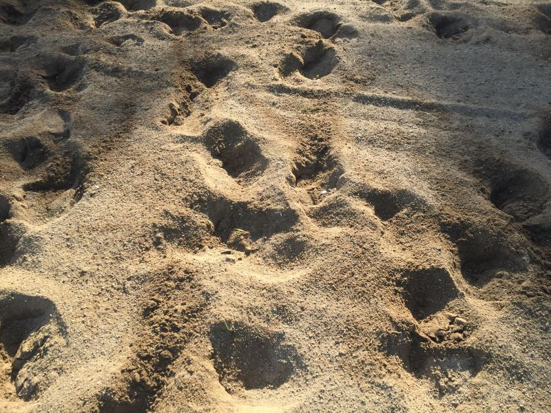 This sand is very unstable and allows deep hoofprints. It shifts too easily under the horses' feet.