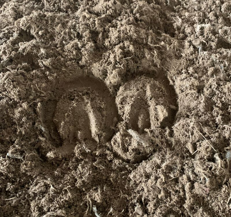 Shallow hoofprints left in arena sand after adding TruTex Fibers. This provides the horse with a lot more support.