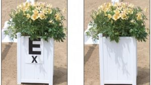 Arena Flower Box