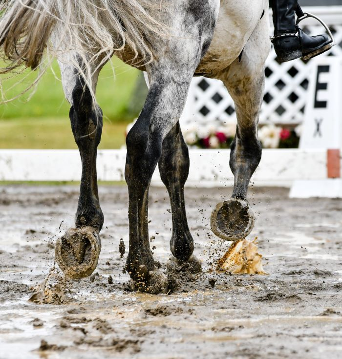A horse riding in a waterlogged muddy arena with puddles
