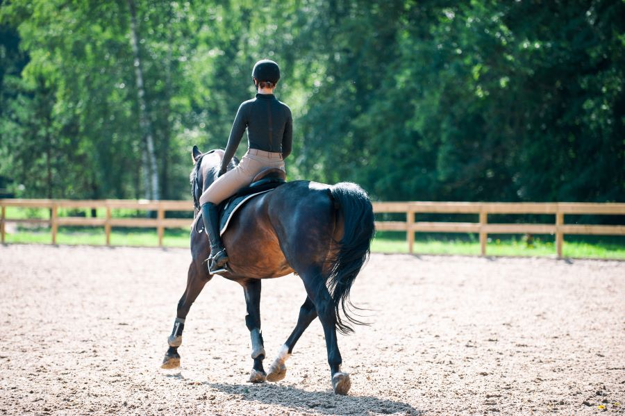 Finding Good Horse Arena Sand Locally