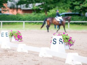 What is the Best Footing for Dressage Horses?